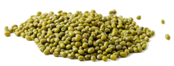 Mung Bean Seeds