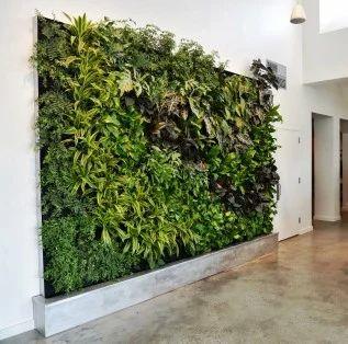 Live Green Wall (Vertical Garden)