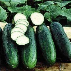Cucumber Vegetable Crops