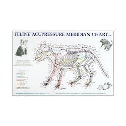 Acupuncture Meridian Charts At Rs 10 Piece Medical Chart Id