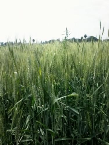 200 Acres Agriculture Land, Agriculture Land Dealing
