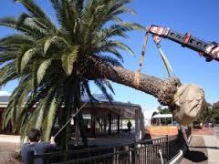 Tree Transplantation Services
