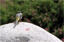 Birding Tours Ladakh