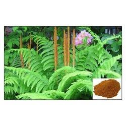 Natura Biotechnol Cinnamon Extract (Polyphenols 10% - 20%), Packaging Type: Bag, Packaging Size: 25 Kg