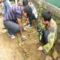Tree Plantation Services