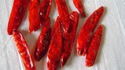 334 Chilli from Guntur
