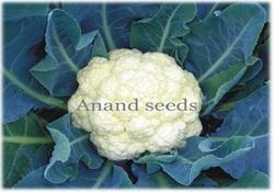 Mahima Vegetable Seeds