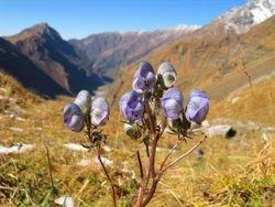 Bird Watching Tour in Himachal