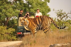 Wildlife Tour Package  Services