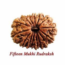 Fifteen Mukhi Rudraksha