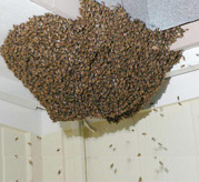 Bee Hives Removable service