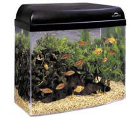 Fish Pot Aquarium Starter Kits Kit Stands