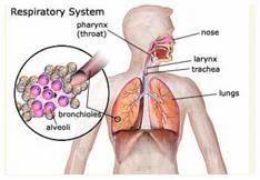 Asthma Allergic Bronchitis Service