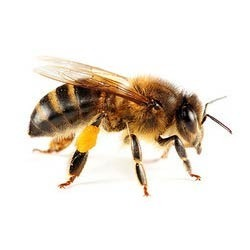 Importance of Apiculture & Beekeeping
