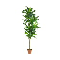Garden Plant in Hyderabad Telangana Suppliers Dealers