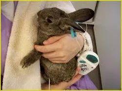 Rabbits Treatment Services
