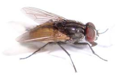 Integrated Fly Management Services