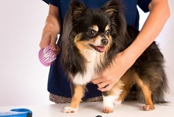 Pets Grooming Service