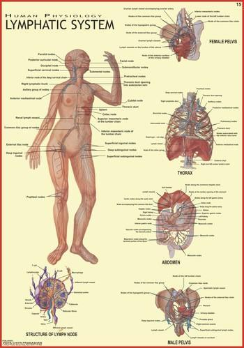 Lymphatic System (Human Physiology), Human Anatomy Charts - Vidya ...