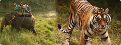 Chitwan National Park Tour Package