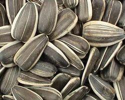 Natural Stripe Grey Black Stripe Sunflower Seeds