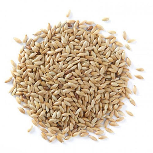 Canary Seed Wholesale Price For Canary Seed In India