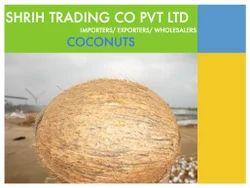 Coconut - Dehusked