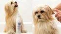 Dog Detangling Pets Treatment