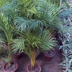 Garden Plant Suppliers Manufacturers Traders in India