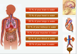 How do you that about 75% water in part of body ?