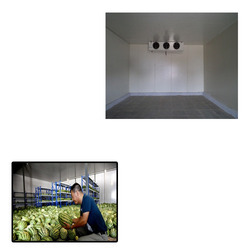 Cold Rooms for Vegetable Storage