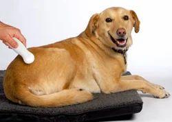 Ultasound Dog Pets Treatment