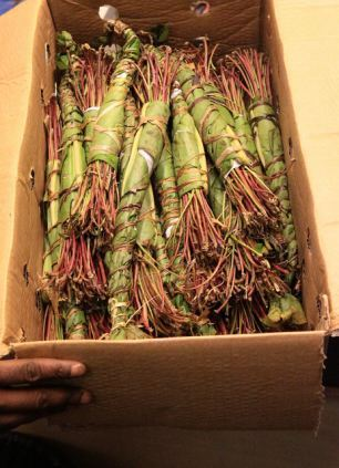 Shen Khat Bio Fertilizer | Riya Company | Retailer in Nashik