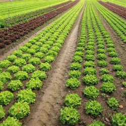 organic agriculture a sustainable solution to the global food supply And as a result of that global food  water supply for agriculture  with the goal of environmental sustainability for a food sustainable.