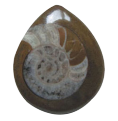 Ammonite Brown Stone