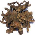 Coleus Dry Roots
