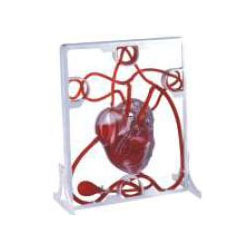 Pumping Heart Models