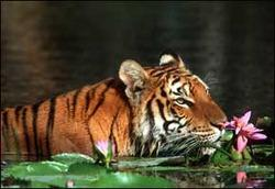 Sunderban Package Tours