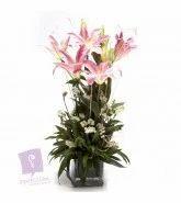 Pretty Pink Lilies