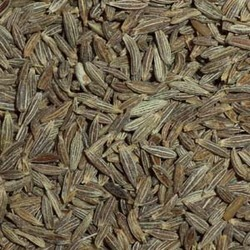 Popular Cumin Seeds