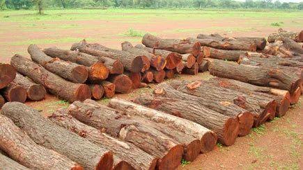 Neem Wood Logs | Nagarjuna Saw Mill & Timber Depo | Manufacturer in Nalgonda, Hyderabad