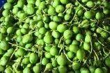 Organic Vadu Maangaai