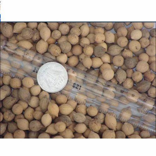 Putranjiva Roxburghii Seed