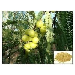 Amla Extract (Tannins 20%-45%), Packaging Type: Hdpe Blue Drum, Pack Size: 25 Kg