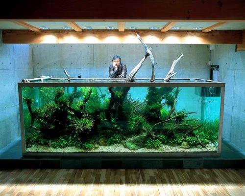 Layout 08 Aqua Plant Dutch Style Fish Aquarium Wholesale Trader From Chennai