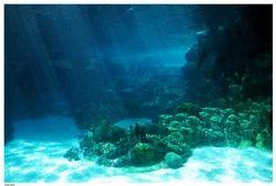 Floor Mounted Under Water Lights
