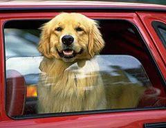 Pet Friendly Car Rentals