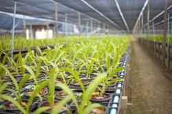 Horticulture Expanded Perlite