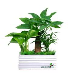 Garden Plant in Delhi Suppliers Dealers Retailers of Garden Plant