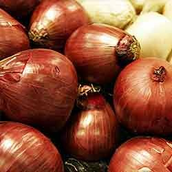 Oleoresin Products - Soluble Onion Oleoresin Manufacturer from Mumbai